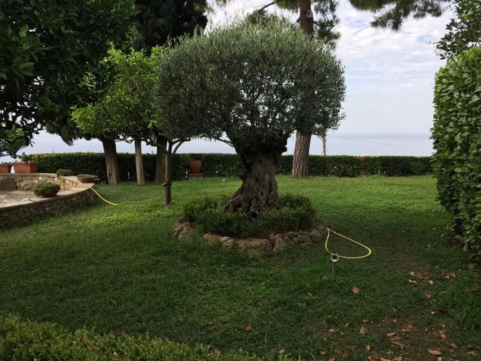 Ventimiglia Fraz. Ville imperdibile vista mare